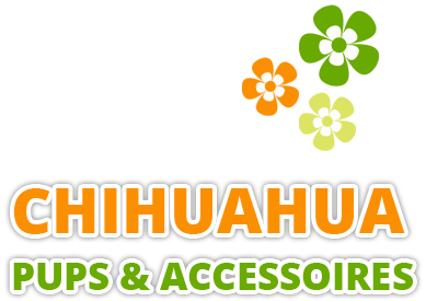 Chihuahua Pups & Accessoires